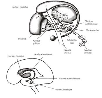 a condyloma megjelenése crijevni paraziták kod stenaca